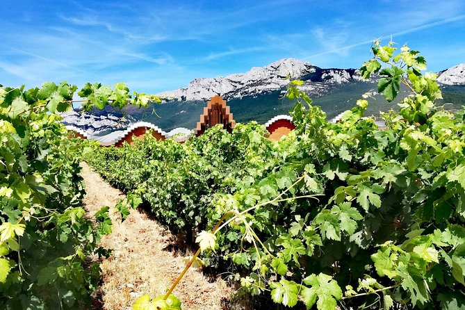 RIOJA UNCORKED - Private Enological Adventure