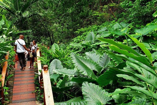 Private Transfer to Konoko Falls Botanical Gardens