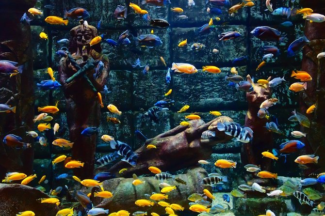 Antalya Aquarium with transfer from Belek