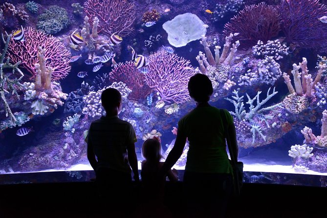 Antalya Aquarium with Transfer from Kemer