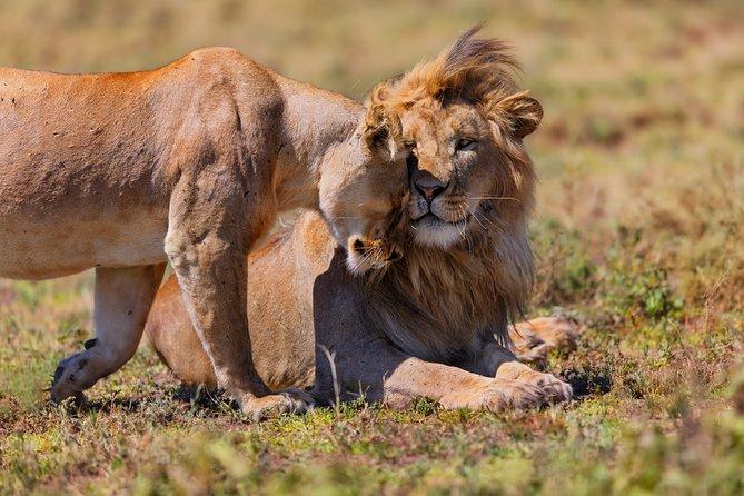 12 Days Family Gate away to the land of Mysterious Wildlife Adventure & Zanzibar