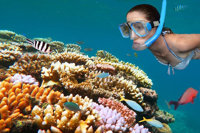 Full Day Snorkeling Trip to Misali island