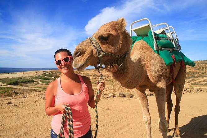 Cabo San Lucas Camel Ride and Encounter on Beach and Desert
