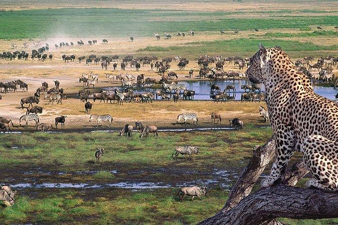 8 Days 7 Nights Tanzania Wildlife & Culture Lodge Safari