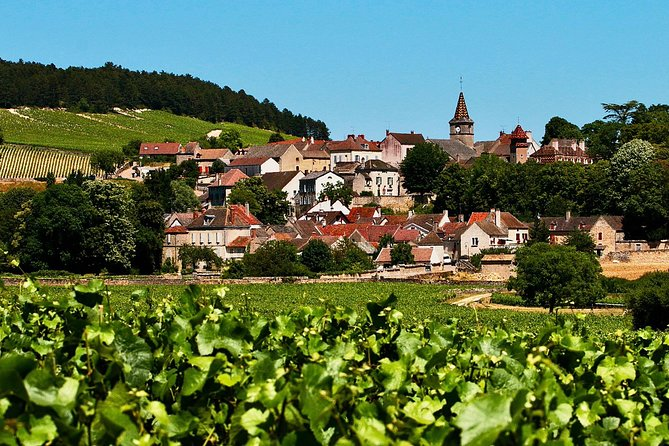 Burgundy Small-Group Full-Day Wine Tour from Paris
