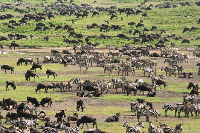 7-Day Private Migration Safari in Tanzania