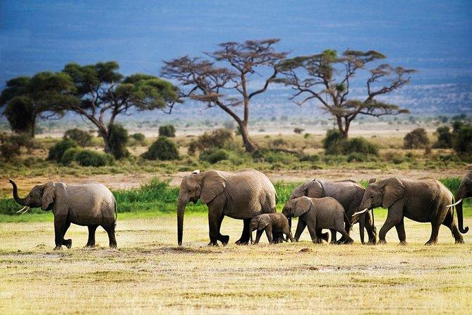 2-Day Tanzania Mid Range Private Safari