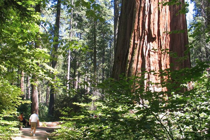California Gold Country History Tour from San Francisco