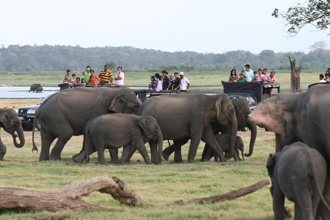One Day Tour To Minneriya National Park