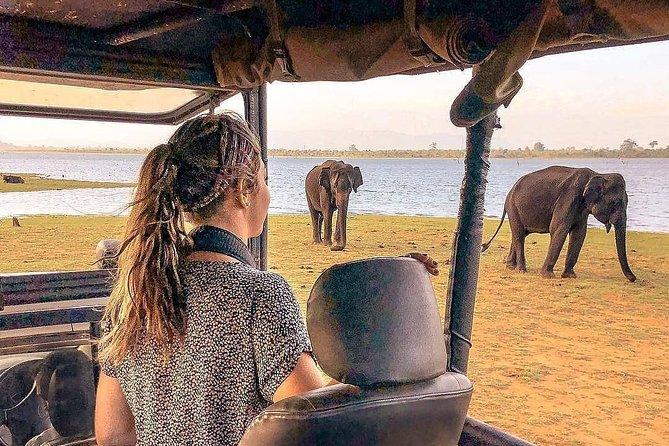 Minneriya Evening Safari Tour