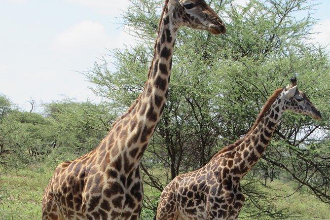 3 Days the Taste of Northern Tanzania Safari