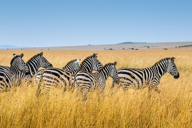 6-Day Camping Safari To Tarangire, Lake Manyara, Serengeti & Ngorongoro