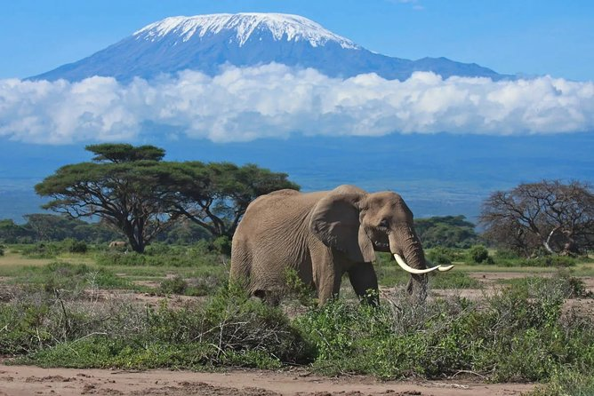 3-Day Private Tour Amboseli National Park and Mt Kilimanjaro