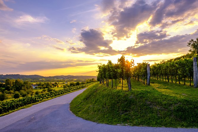 Goriska Brda & Vipava valley wine tour | Private trip from Ljubljana
