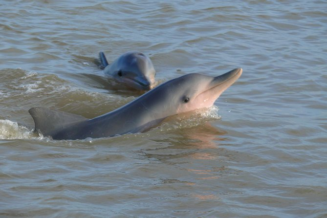 Dolphin Watching Experience from Leonsberg
