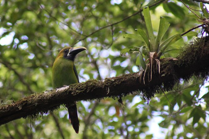 Small-Group Natural History Walk Tour to Monteverde