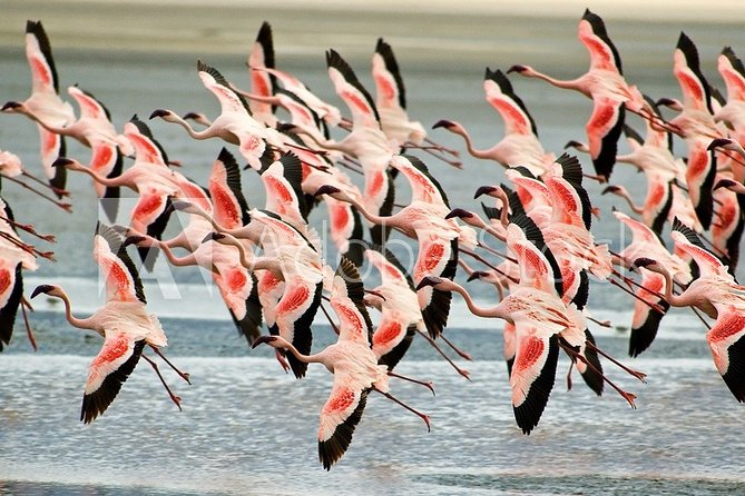 Lake Manyara-Serengeti-Ngorongoro-Lake Eyasi-Tarangire-Arusha National Park