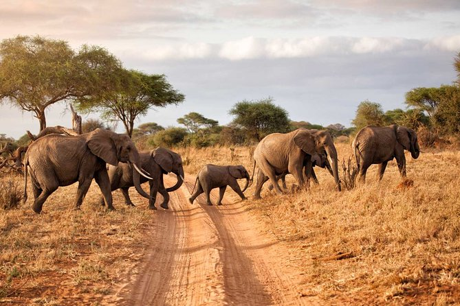 Tanzania Northern Circuit Lodge Safari - 6 Days Itinerary.