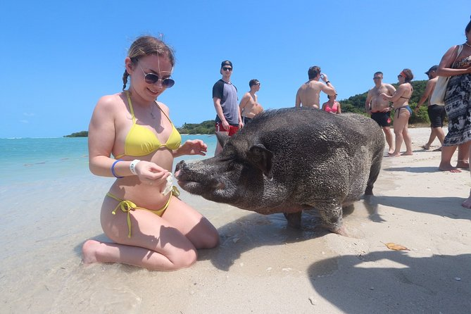 Pig Island Private Longtail Boat Trip From Koh Samui