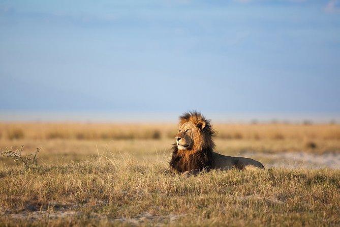 Full-Day Safari Experience in Zambezi National Park
