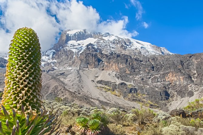 7 Days Mount Kilimanjaro Lemosho Route