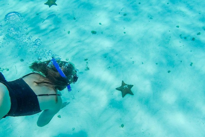 DIVE in 'El Cielo' Cozumel and enjoy the reefs. Included Food and Transportation