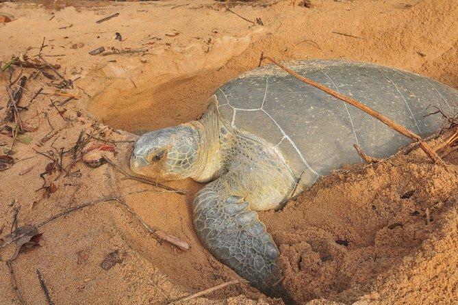 Sea Turtles & Braamspunt