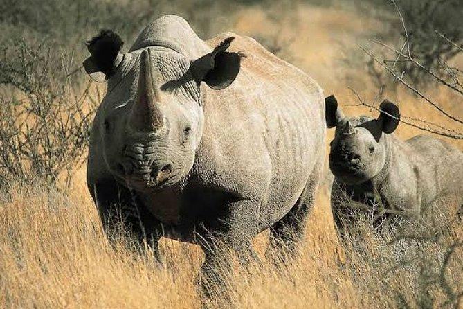 Full-Day Tanzania Safari Tour to Ngorongoro Crater