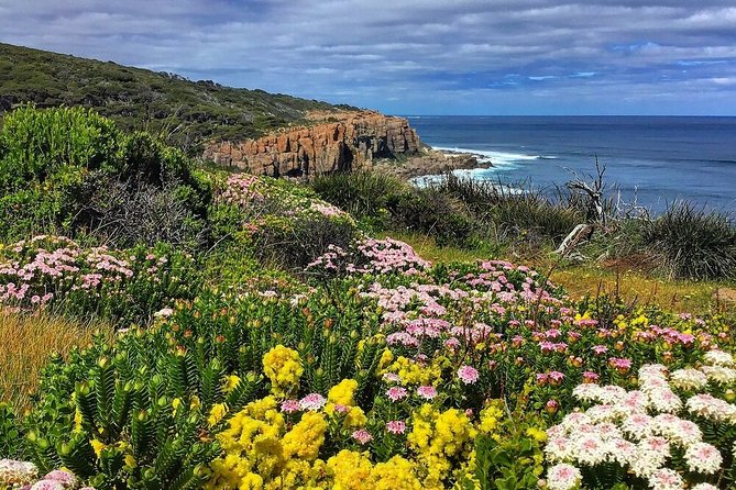 Guided Walks on the Cape to Cape - Moses Rock to Ellenbrook