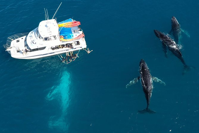 Remote Fraser Island & Whale Experience