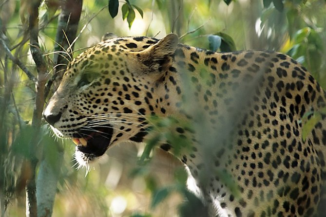 Sri Lanka Leopard Trail ( 15 N/ 16 D)