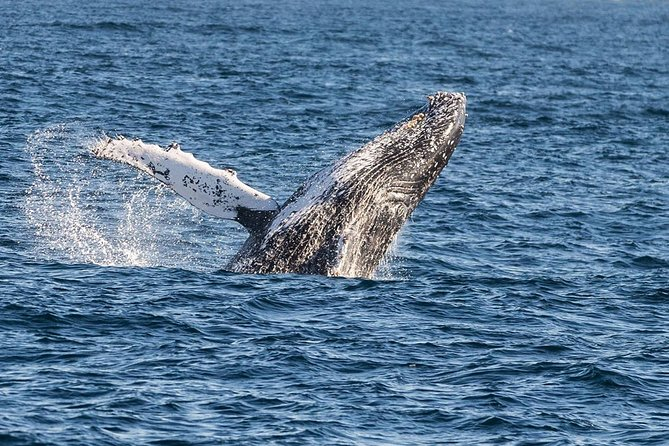 Private Excursion to Mirissa Whale Watching