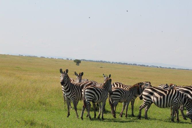 2-Day Tour in Tarangire and Ngorongoro