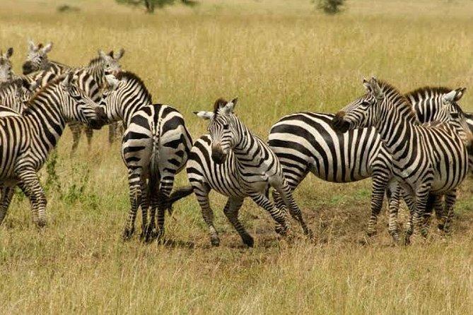 Full-Day Tanzania Safari in Arusha National Park