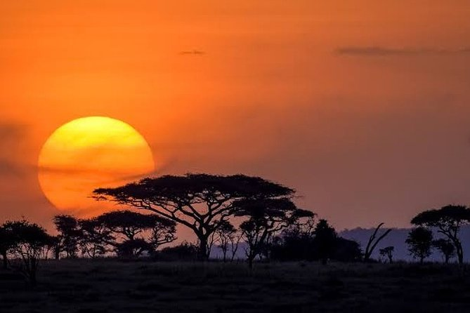 8-Day Small-Group Safari Adventure in Tanzania