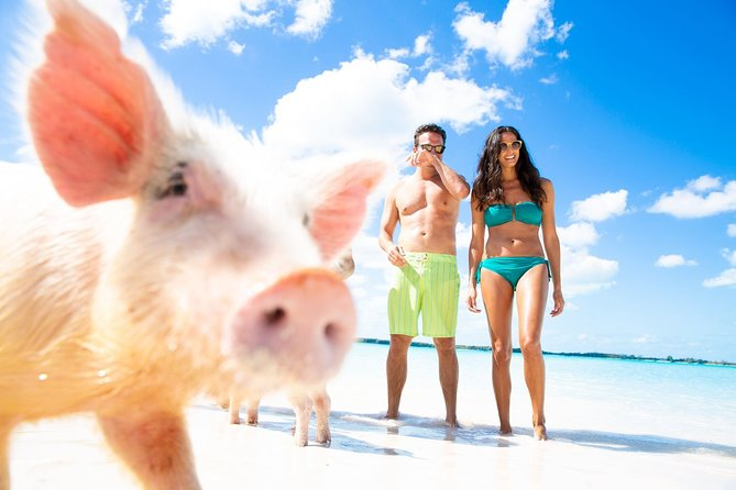 Pig Feeding, Kayaking, Snorkeling Trip at Pig Island By Speedboat From Koh Samui