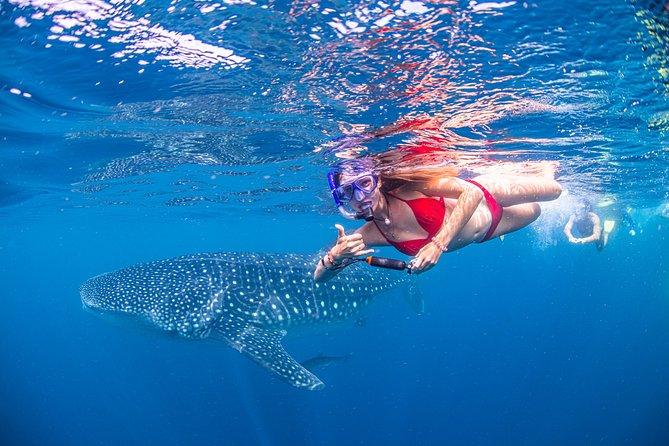Whale Shark Adventure Swims on Ningaloo Reef - Exmouth WA