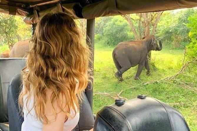 Udawalawe National Park : One Day Tour