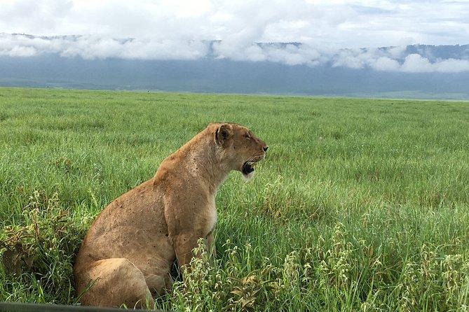2 Days Safari-Tarangire and Ngorongoro Crater