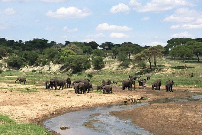 3 Days Lake Manyara, Ngorongoro Crater & Tarangire