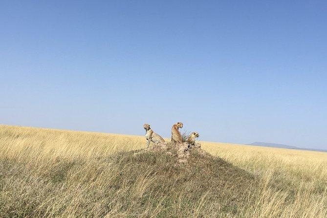 4 Days Lake Manyara, Serengeti & Ngorongoro Crater
