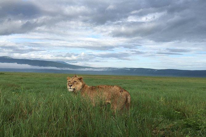 5 Days Lake Manyara, Serengeti & Ngorongoro Crater
