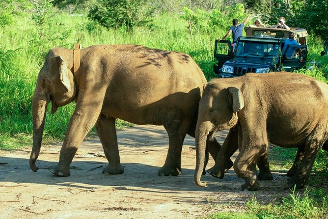 Hurulu Eco Park Private Safari with Naturalist