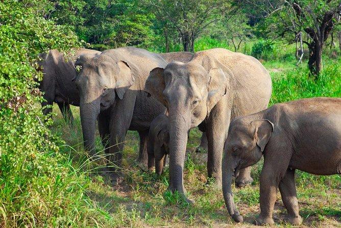 Hurulu Eco Park Private Safari from Sigiriya