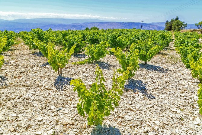 WINE TOUR from Paphos
