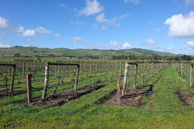 Phillip Island Wine Experience Tour