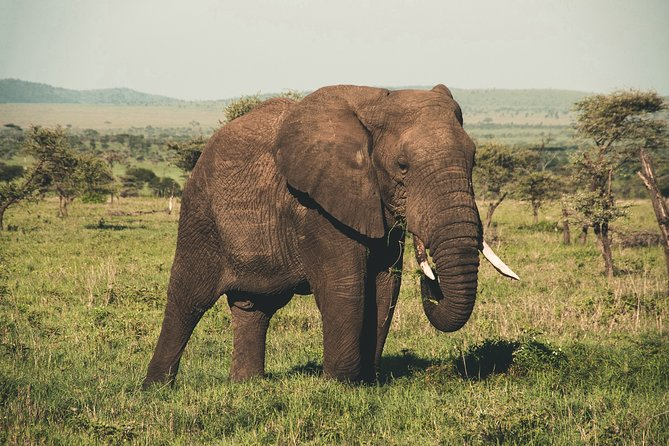 Wasgamuwa National Park Safari