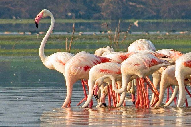 Bundala National Park Private Safari