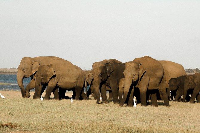 Kaudulla National Park Safari from Sigiriya