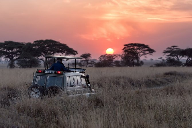 Blissful Safari Experience in Yala (Evening)